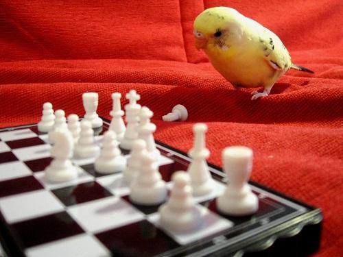 Pensive Parakeet - コピー