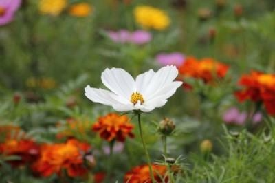 white-blossom-184571_1280-480x319